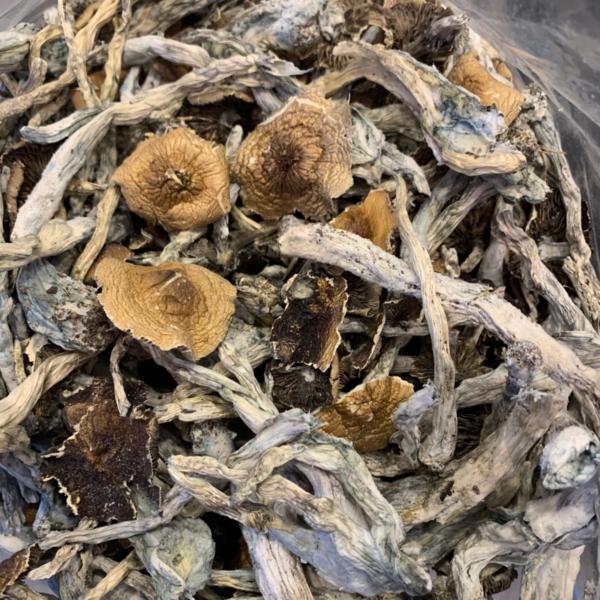 mushroom drug, shrooms online, psychedelic shrooms effects, brazillian mushrooms